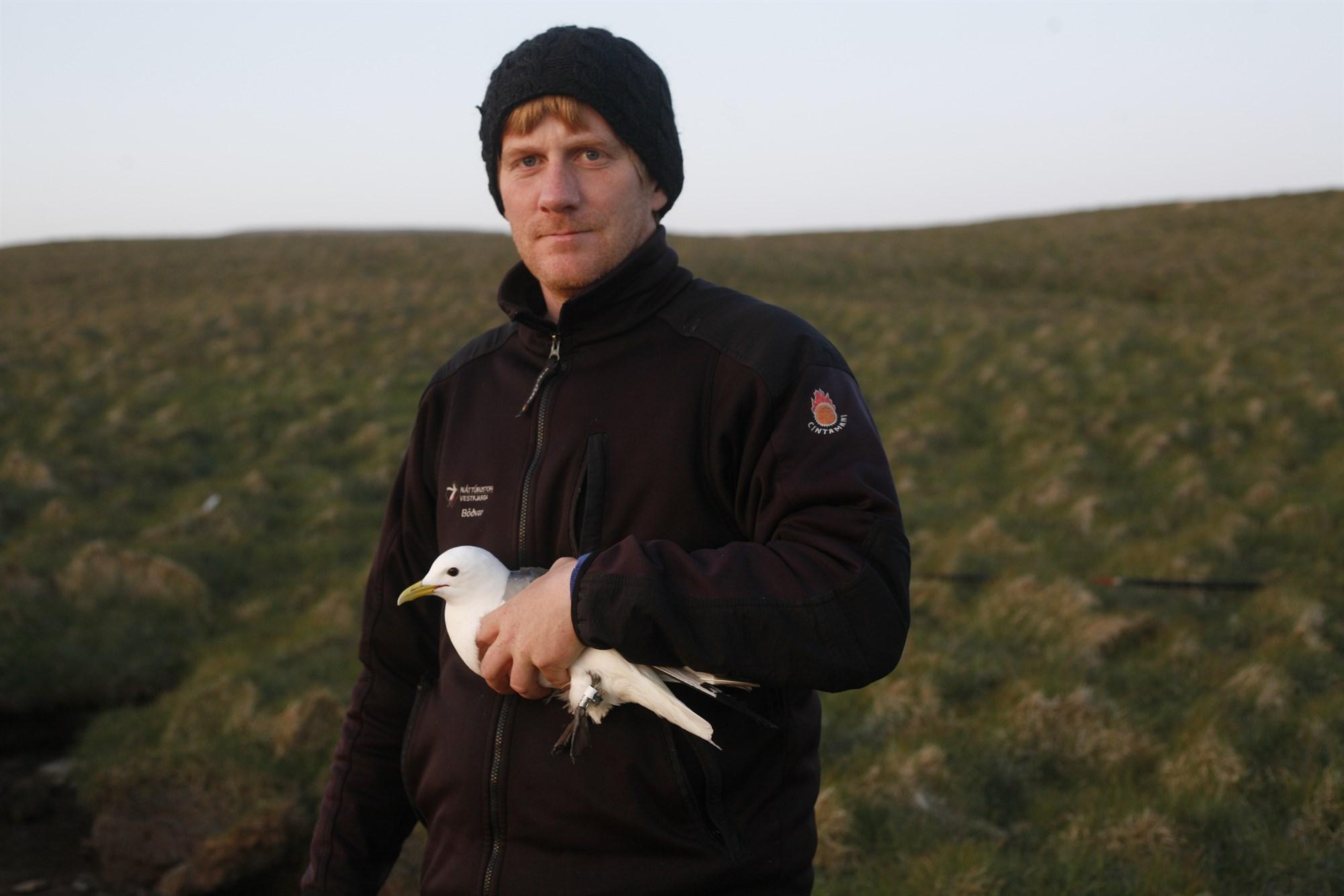 Bird Data Logger : Bird geolocator light logger